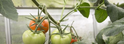 Quels légumes cultiver dans une serre en hiver ?