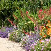 Comment créer des massifs fleuris pour pas cher ?