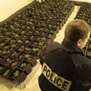 Cannabis : «Une légalisation ferait de l'État le complice des mafias»