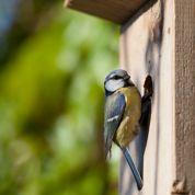 Oiseaux des jardins : il est temps d'installer des nichoirs