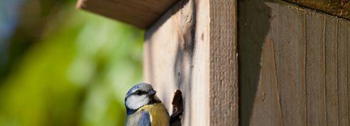 Oiseaux des jardins : il est encore temps d'installer des nichoirs