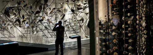 Confluences : six expositions, du dinosaure au grille-pain