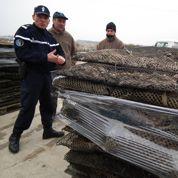 Le vol des huîtres, une triste tradition qui perdure