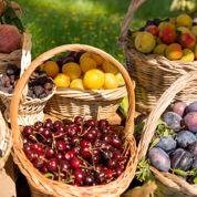 Le Verger dans l'assiette :faisons feu de tout fruit