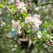 Les fleurs d'un arbre donnent-elles toujours des fruits ?