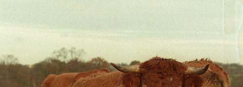 Bruxelles demande la levée de l'embargo américain sur son bœuf