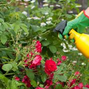 Peut-on se passer de pesticides au jardin ?