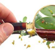 Santé des plantes : devenez un lanceur d'alerte!