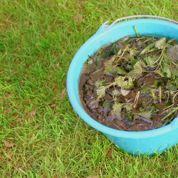 Parasitisme: faut-il jeter les purins de plantes aux orties?