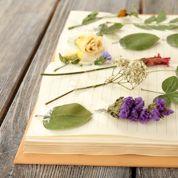 Comment apprendre les noms des familles végétales ?