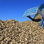 Le Foll veut renforcer la filière sucrière française