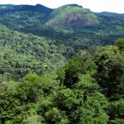 La Guyane, nouvelle terre d'exploration du Muséum