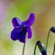 Rhume, bronchite: les dix plantes qui soulagent
