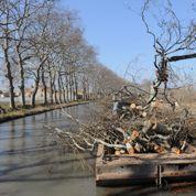Canal du Midi : 530.000 euros recueillis pour sauver les platanes