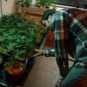 Cannabis, nourriture, mode : les nouveaux terrains de la tech