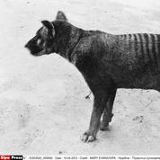 L'Australie frappée par une extinction de masse