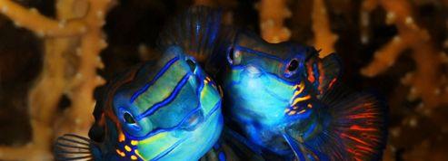 L'Aquarium de Paris présente les familles sous-marines