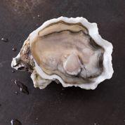L'huître devenue perle rare