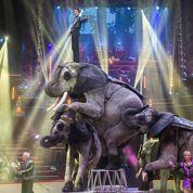 Le Cirque d'Hiver bat un record éléphantesque