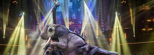 Le Cirque d'Hiver bat un record de fréquentation éléphantesque