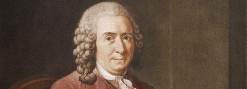 Sur Wikipédia, Linné est plus fort que Jésus