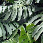 Quelles plantes installer dans une jardinière à réservoir?