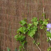 Pesticides: quels arbustes planter près d'un champ cultivé?