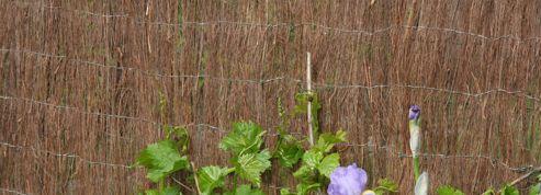 Pesticides: quels arbustes résistants planter au bord d'un champ cultivé ?