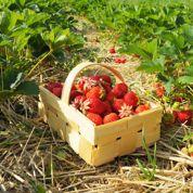 Semez les premiers légumes et préparez la récolte de fraises