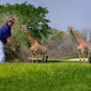 Afrique du Sud : en brousse, deux golfs d'exception