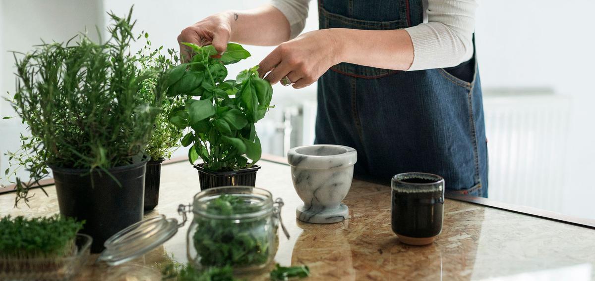 Comment Reussir A Garder Ses Plantes Aromatiques Dans Sa