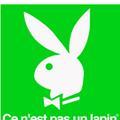 Colette et les lapins (pas crétins)
