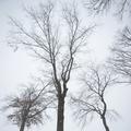 Blizzard sur New York
