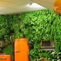 Faites le mur… végétal