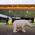 La récidive de l'ours polaire