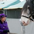 La reine qui murmurait à l'oreille des chevaux