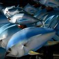 Greenpeace hausse le thon