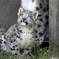 Les imprimés animaliers interdits dans un zoo anglais