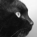 Quelles sont vraiment les origines de nos superstitions ?