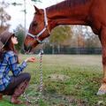 Les chevaux, nouveaux thérapeutes