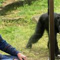 """Jane Goodall : """"Je méprise la cruauté"""""""
