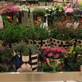 Marni couvre de fleurs le Bon Marché