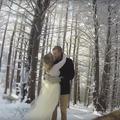 Un chien husky filme le mariage de ses maîtres