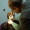 Iran : le boom de la chirurgie esthétique