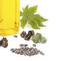 Soin du visage : les secrets de l'huile de ricin