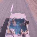 Stella McCartney : la vidéo rose bonbon de son nouveau parfum Pop