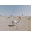 Agoraphobe, elle voyage via Google Street View et capture d'étonnantes photos