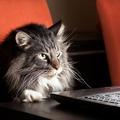 Comment les chats sont devenus de véritables e-influenceurs