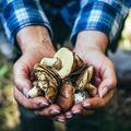 Cèpes, girolles, bolets... Les secrets d'une cueillette de champignons réussie
