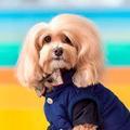 Ce chien est le sosie parfait d'une actrice hollywoodienne